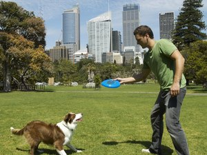 Herder Training Methods for a Border Collie