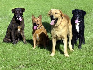 How to Help Take Care of Your Dogs & Puppies