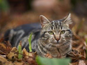 Can You Catch Fleas from a Feral Cat?