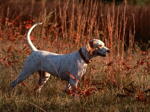 What Does a Bird Dog Mean?