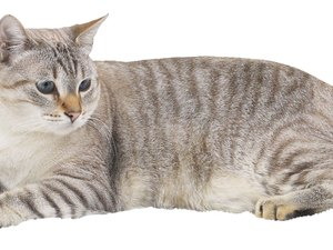 How to Restrain a Cat for a Spot-On Flea Treatment