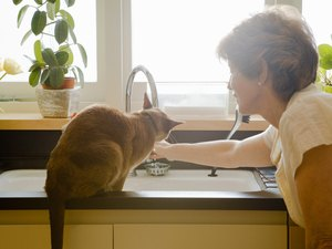 Prednisone and Vomiting in Cats