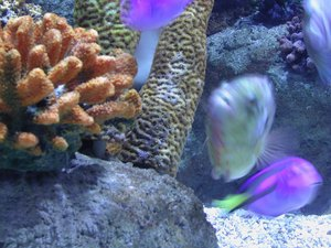 How to Increase the pH Level in a Brackish Aquarium