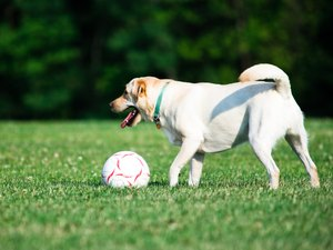Some Ways to Get a Hyper Dog Active
