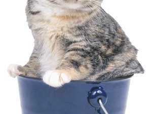 Can Dampness Cause Staph Infections in Cats?