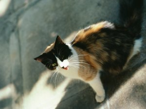 Drugs to Treat Internal Parasites in Cats