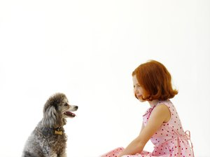 Anemia In Poodles