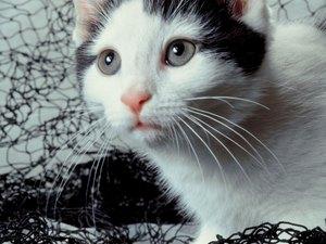 cat sandwich fibers