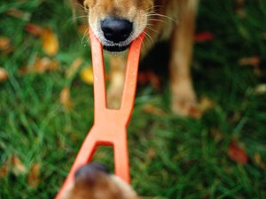 How to Stop Obsessive Behavior in a Dog