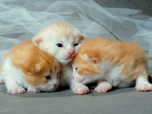 What Is the Name for a Litter of Newborn Kittens?