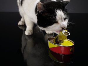 Weight Loss Diets for Cats