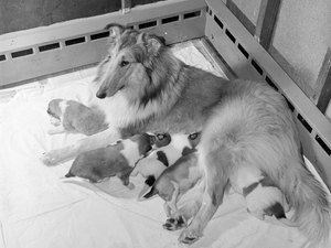 When Do Puppies Stop Nursing From Their Mother?