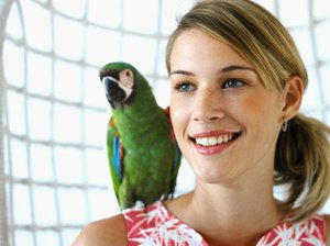 What Causes Parrots to Feel Stressed?