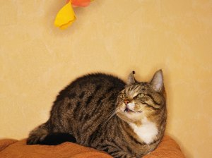 Is Cat Nip Bad for Cats?
