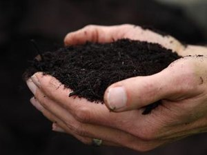 Composting Facts for Nitrogen and Phosphorus