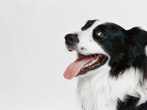 Natural Remedies for Red Gums in Dogs