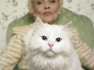Are Blue-Eyed White Cats Really Deaf?