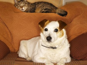 Socialization Between Cats & Dogs