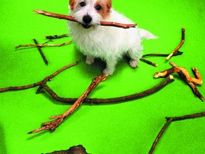 How to Keep Dogs From Destroying Trees & Bushes