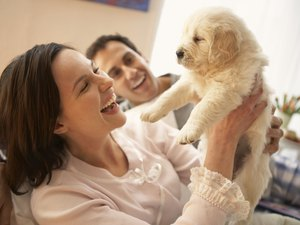 How Much Care Does a Puppy Require?