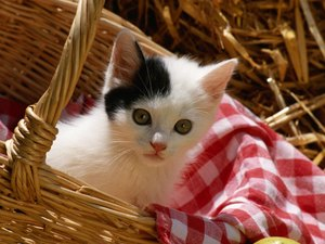 Health Questions for Kittens