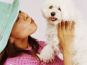 Recommended Dog Foods for Maltese Dogs