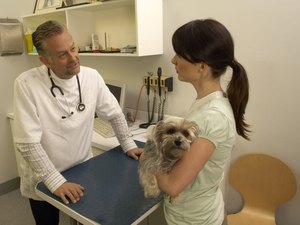 Medical Insurance for Dogs