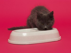 How to Switch a Small Kitten From Canned Food to Dry Food