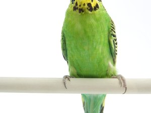 Recipes For Parakeets
