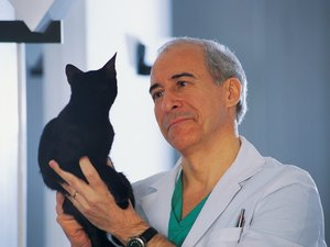 How to Diagnose a Cat With a Sternum Bone Problem