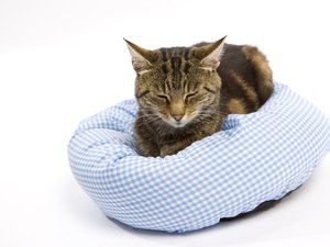 Post-Neutering Pain Medications for Cats