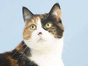 Homeopathic Medications for Cats With Separation Anxiety