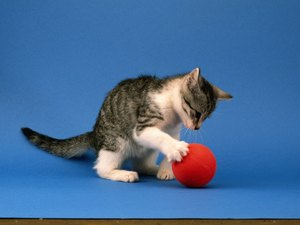 DIY Exercise for Cats