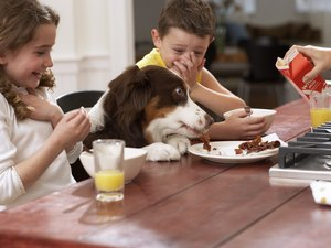 Most Dangerous Foods for Poodles