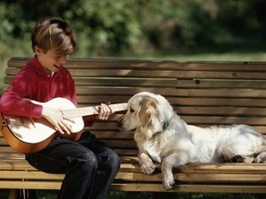 Do Different Types of Music Affect a Dog's Behavior?