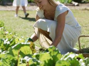 Benefits of Gardening Your Own Vegetables