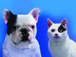 Dog & Cat Food Recalls