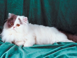 What Are the Causes of Blindness in Cats Late in Life?