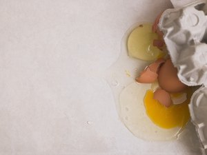 Do Egg Yolks Make a Dog's Coat Better?