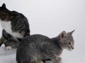 How Long Does It Take for Cats to Get Along With New Kittens?