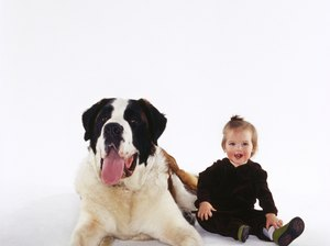 How Early Can a Saint Bernard Puppy Be Adopted Out?