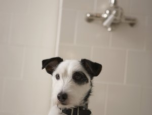 Do You Use Oatmeal Shampoo if Your Dog's Hair Is Oily?