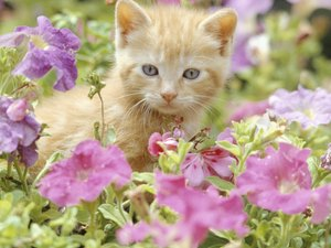 Cats Who Have Hay Fever