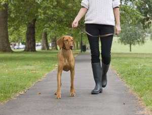What Is the Correct Heeling Position for Dogs?