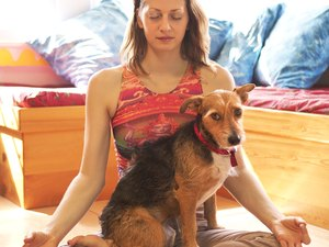 Do Comfort Diffusers Work to Calm Dogs?