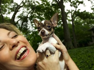 How to Get Tartar Off a Chihuahua's Teeth
