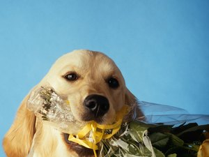 Can Dogs Eat Carnation Stems?
