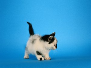 What Could Cause a Kitten to Lose His Equilibrium?