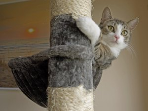 How to Curtail Behavior in Cats