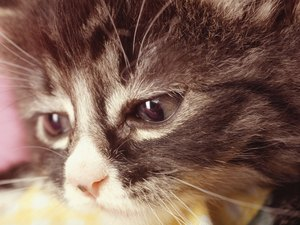 When a Cat Dies Does His Companion Grieve?